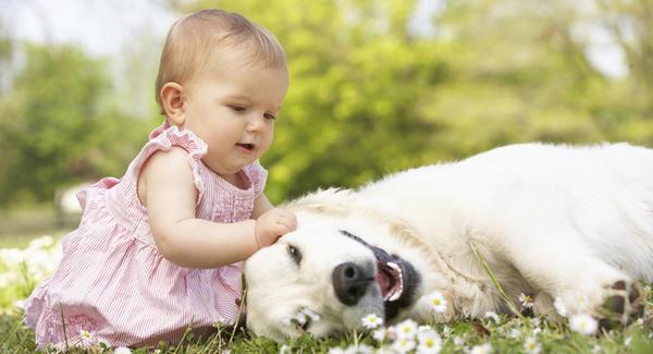 animal-de-estimacao-crianca